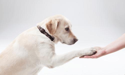 犬 しつけ ストレス