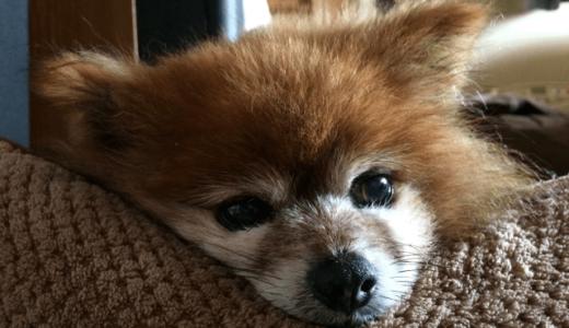 共働きの子犬の飼い方