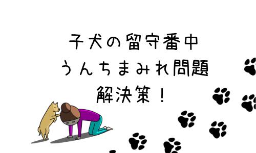 子犬の留守番