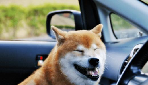 旅行好き 犬