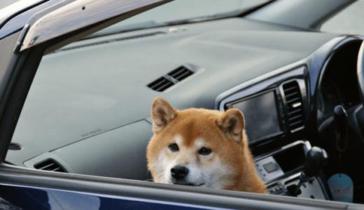 犬との旅行が好き
