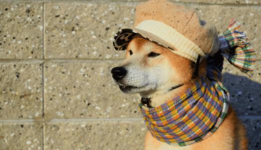 犬との旅行