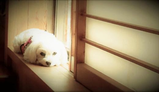 犬のノイローゼ