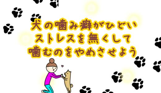 犬がストレスから噛むようになったら…〇〇するだけ解決法!