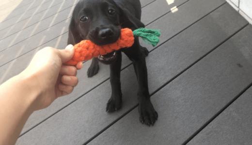 ストレスで噛む犬