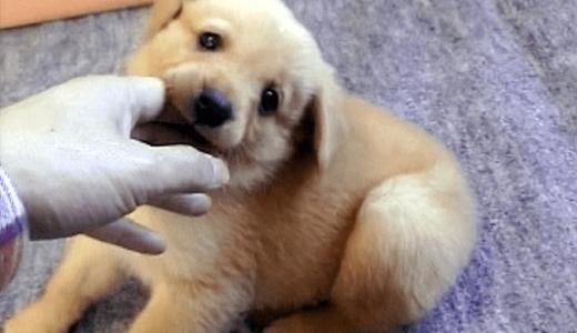 子犬の甘噛み