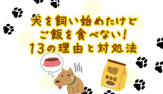犬を飼い始めたけどご飯を食べない!13の理由と対処法を徹底解説!