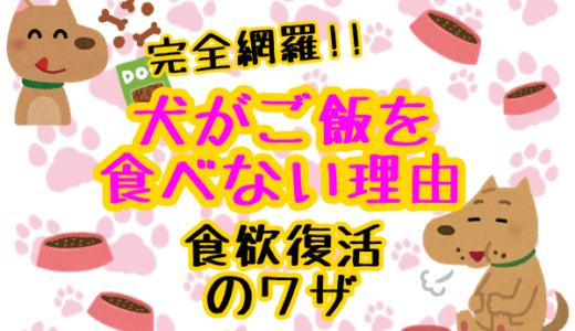 犬がご飯を食べない理由は?【完全網羅】愛犬の食欲が復活するワザ集