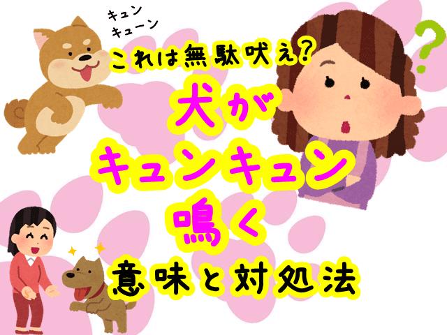 犬 キュンキュン 鳴く